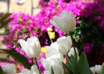 Tulpen im Auferstehungsgarten